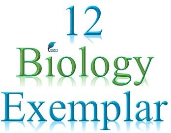 Ncert Exemplar Problems Class 11 Biology Pdf